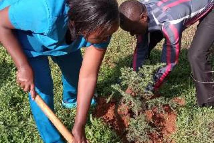 Uhs Nurse participate in tree planting
