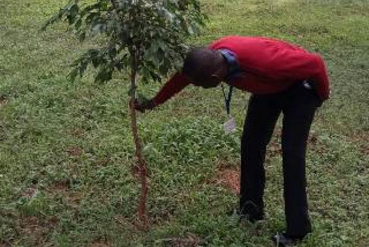 Records In charge  Mr. Allan Participates in tree planting